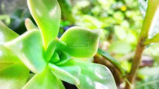 緑の写真・画像素材[442103]