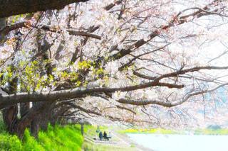 自然の写真・画像素材[444138]