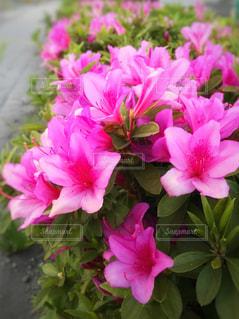 花の写真・画像素材[465460]