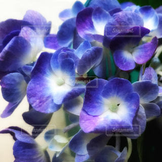 花の写真・画像素材[568619]