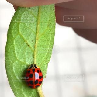 虫の写真・画像素材[574294]