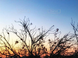 夕焼けの写真・画像素材[859770]