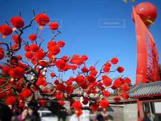 春節の写真・画像素材[1001712]