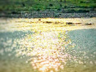 キラキラ光る川面の写真・画像素材[1164374]