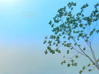 美しい空と爽やかな木の写真・画像素材[1213036]