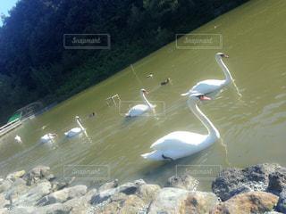 湖の写真・画像素材[331845]