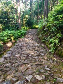 熊野古道の写真・画像素材[1593272]