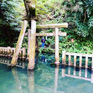 鹿島神宮 御手洗池の写真・画像素材[3796908]