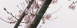 小鳥の囀りが聴こえてきそう。の写真・画像素材[841045]