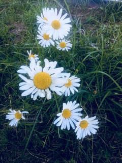 野花の写真・画像素材[903208]
