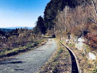 山道の写真・画像素材[904836]