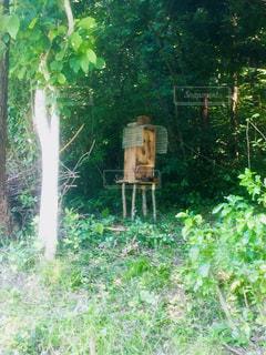 蜂の巣箱の写真・画像素材[904843]