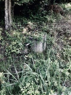 井戸の写真・画像素材[904845]