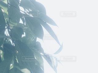 日差しの写真・画像素材[904847]