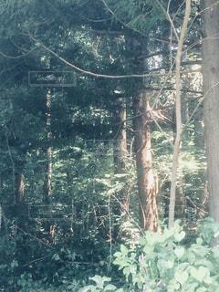 森林の写真・画像素材[904943]