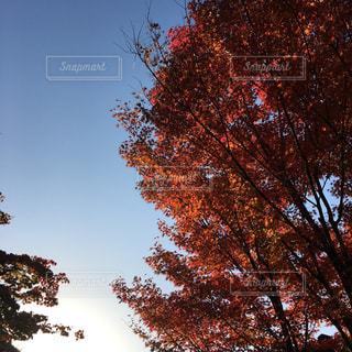 紅葉 - No.332149