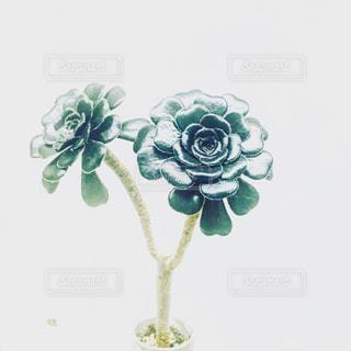 観葉植物 - No.333014