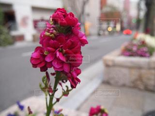 花の写真・画像素材[332599]