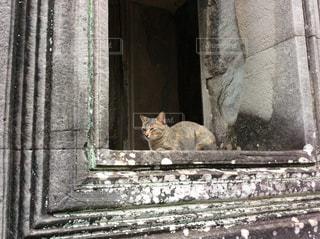 猫の写真・画像素材[332641]