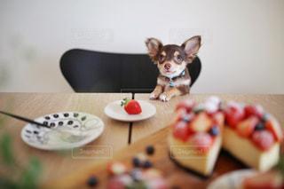 犬の写真・画像素材[369379]