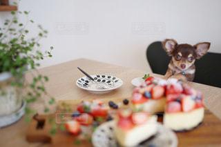No.369396 犬