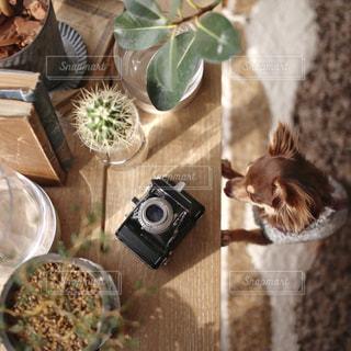 カメラが気になるワンコの写真・画像素材[1027943]