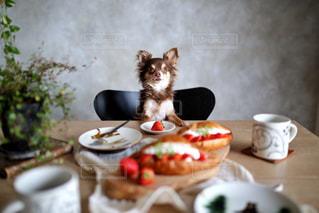 テーブルに食べ物のプレートの食糧を食べる猫の写真・画像素材[1082472]