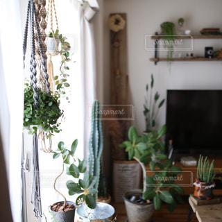 観葉植物に囲まれる暮らしの写真・画像素材[1109870]