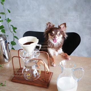 テーブルの上に座って猫の写真・画像素材[1217445]