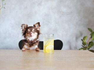 座っている犬の写真・画像素材[1266484]