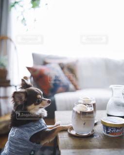 お家カフェ、茶々丸も気になる🐶の写真・画像素材[2374461]