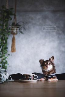 ワンコカフェの写真・画像素材[2475303]