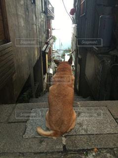 No.332771 犬