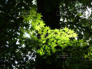 森林の写真・画像素材[332979]
