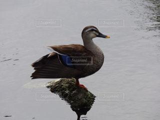 鳥の写真・画像素材[333159]
