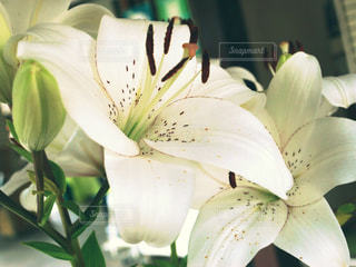 花の写真・画像素材[679024]
