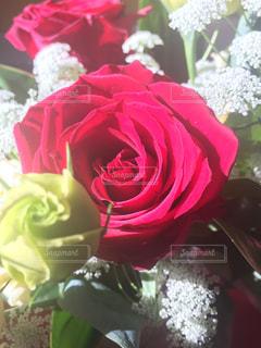 花束の贈り物の写真・画像素材[2623631]