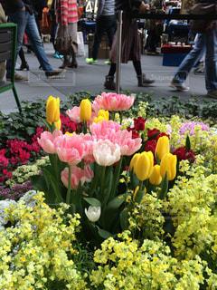 テーブルの上の花の花瓶の写真・画像素材[1303013]