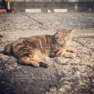 猫の写真・画像素材[390824]