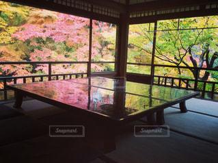 紅葉の瑠璃光院の写真・画像素材[333415]