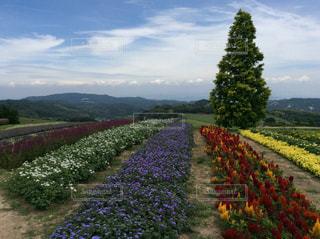 花畑の写真・画像素材[608486]