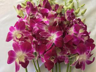 花の写真・画像素材[333440]