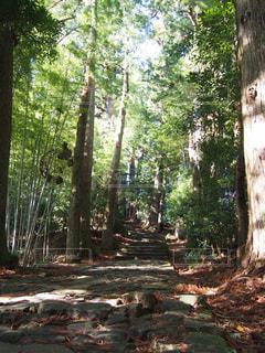 森林の写真・画像素材[335459]