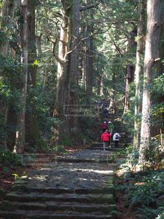 森林の写真・画像素材[335460]
