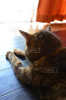 猫の写真・画像素材[337850]