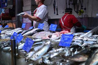 魚の写真・画像素材[357426]