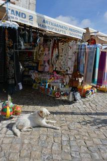 犬の写真・画像素材[357848]
