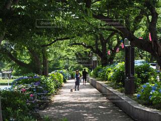 公園で犬の散歩をする人の写真・画像素材[1449545]
