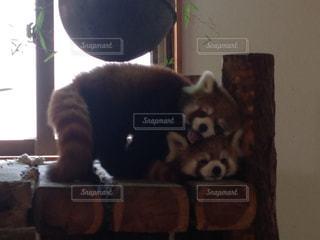 動物の写真・画像素材[334133]