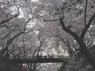 自然の写真・画像素材[334141]